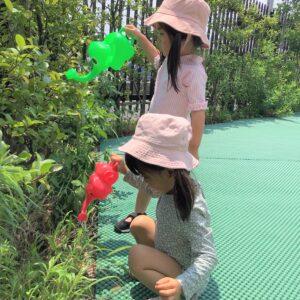 植物への水やりを楽しんでしてくれています